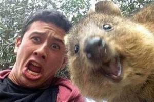 Quokka Selfie 1.jpg